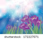 Vector Spring Crocuses Flowers...