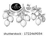vector sketch citrus fruit... | Shutterstock .eps vector #1722469054