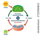 Chloroplast Vs Mitochondria...