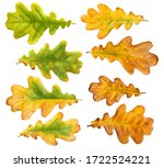 Autumn Oak Leaves Isolated On...