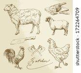 carne de bovino,frango,reduzir,diagrama,comer,porco,cordeiro,perna,agora,carne,parte,carne de porco,aves de capoeira,regime de,esboço
