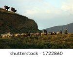 armenian herd with herders in... | Shutterstock . vector #1722860