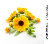 Calendula. Marigold Flowers...