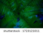 Green Fern Leaves Close Up....