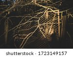 Tree Branches Behind The Fence...