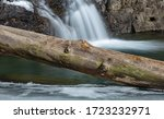 A Wooden Log Lays On A Thin...