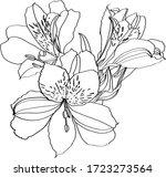 alstroemeria vector... | Shutterstock .eps vector #1723273564