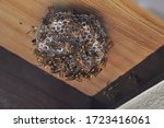 Nest Of A Paper Wasp Under The...