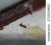 A Close Up Photograph Of A Tiny ...