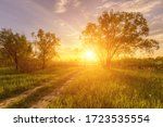 Scene of beautiful sunset or sunrise in a summer field with willow trees and grass. Landscape. - stock photo