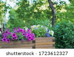 Petunia  Amaranth  Ageratum An...