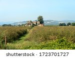 COuntry landscape at summer along the via Emilia near Forli