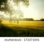 landscape with tree on the... | Shutterstock . vector #172371041