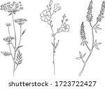 herbarium botanical hand dawn... | Shutterstock .eps vector #1723722427