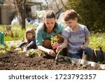 Small photo of Mom and two kids planting seedling In ground on allotment in garden