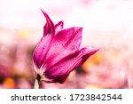 Purple Tulip Flower Bouquet...