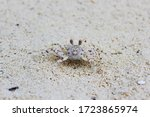 Closeup View Of Small Crab On ...