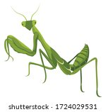 illustrations of praying mantis.... | Shutterstock .eps vector #1724029531