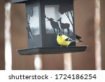 Male Goldfinch Perched On A...
