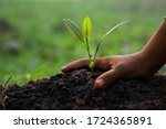 Hands Of Children Are Planting...
