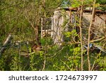 Old Abandoned Shed Overgrown B...