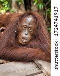 Central Kalimantan  Borneo ...