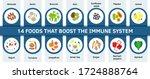 human health immune system... | Shutterstock .eps vector #1724888764