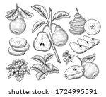 vector sketch pear decorative... | Shutterstock .eps vector #1724995591