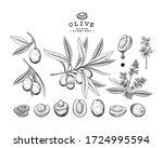 vector sketch olive decorative... | Shutterstock .eps vector #1724995594