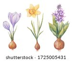 Bulbous Plants In The Spring ...