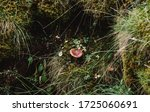 A Lone Red Mushroom In The...