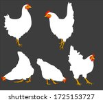 the chickens hen fowl chick | Shutterstock .eps vector #1725153727