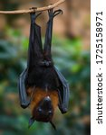 Upside Down Bat Resting On The...