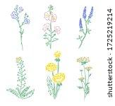 botanical hand drawn herbarium... | Shutterstock . vector #1725219214