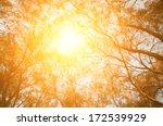 tree look up with sun light...   Shutterstock . vector #172539929