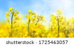 Agricultural Field With...