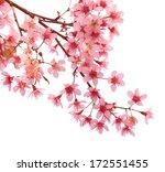 pink cherry blossom sakura   Shutterstock . vector #172551455