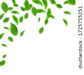 falling green leaves. fresh tea ... | Shutterstock .eps vector #1725755251