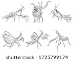 set of praying mantis. ... | Shutterstock .eps vector #1725799174