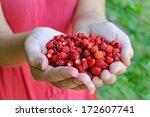 fresh forest strawberries in... | Shutterstock . vector #172607741
