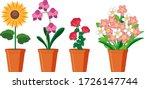 Beautiful Flowers In Pots On...