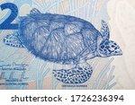 Hawksbill Sea Turtle A Portrai...