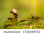 Family Of Fungi Grows Up In Th...