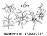 vector sketch peach decorative... | Shutterstock .eps vector #1726657957
