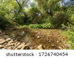 The Dan Stream Watercourse In...