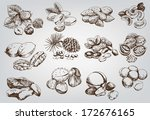 hazelnuts. set of vector sketches