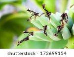banana bunch on tree in the... | Shutterstock . vector #172699154