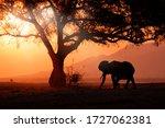 Elephant Sunset At Mana Pools...