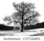 Single Tree In Snow Covered...