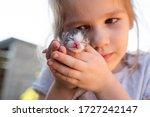 Newborn Kitten In Hands Of A...